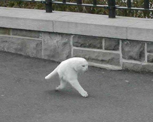 Необычные фото, снятые компании Google на улицах мира.