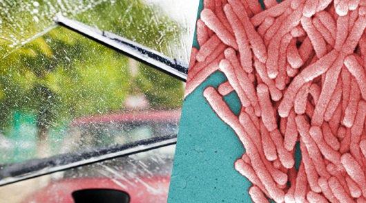 Омывающей жидкость лобового стекла может содержать смертельные бактерии