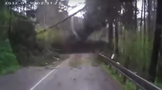 Смотрите как автомобиль был внезапно атакован деревьями