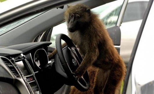 14 вещей, которые не должны делать пассажиры в автомобиле